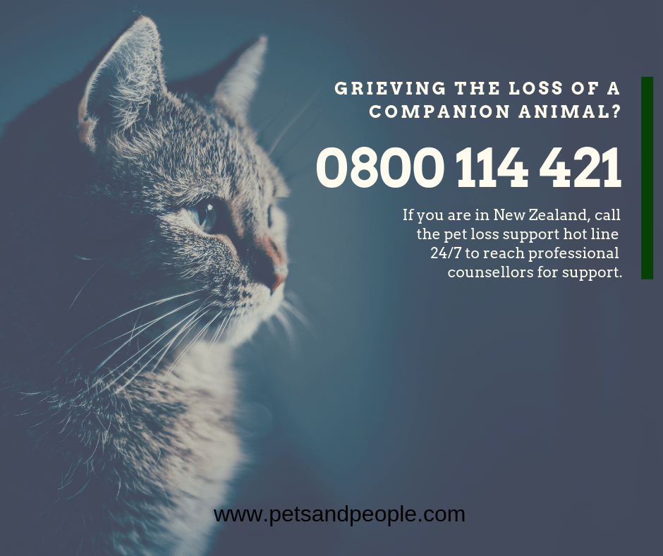 New Zealand's first Pet Loss Support hotline established at 0800 114 421