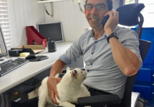 hotline-pet-loss